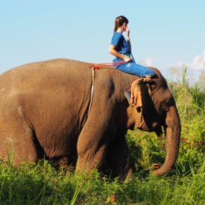 Thailand11-