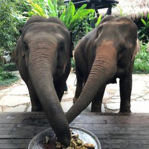 Thailand8-
